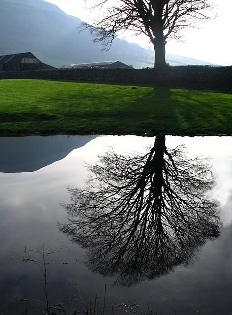 2008 02 09 Lancaster Canal reflection Farm Tree