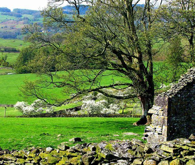 2009 04 13  Winster Valley Damson Sunday