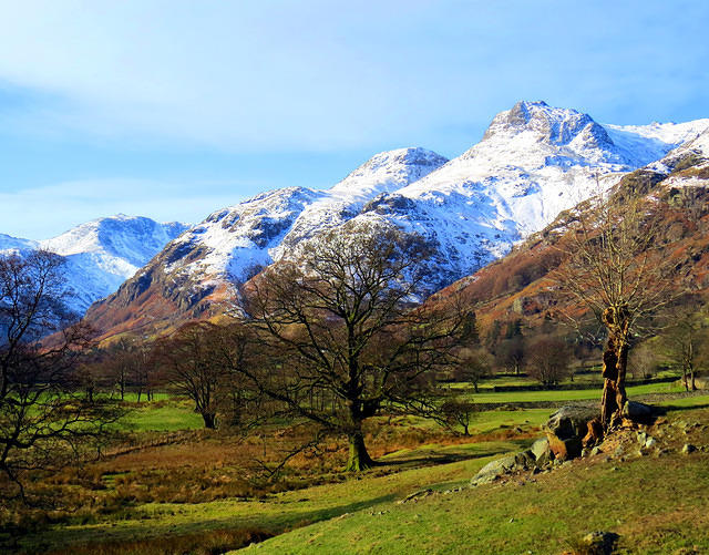 2015 02 04 Langdale Pikes and tree