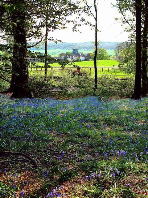 Cartmel Bluebells and Priory.jpg