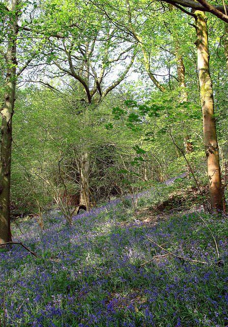 Cartmel Bluebell woods.jpg