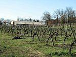 2006 03 12  Vineyard near Cognac.jpg