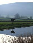 2008 02 09 Lancaster Canal reflection Horse