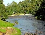 2012 09 19 Bolton Abbey Wharfe riverbank (1)