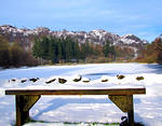 2013 01 22 Yew Tree Tarn - viewpoint