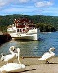 Swans at Bowness.jpg