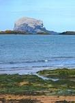2010 05 26 The Bass Rock and shore