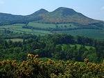 B Eildon Hills and gorse.jpg